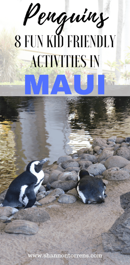 Penguins in Maui - free things to do in Maui