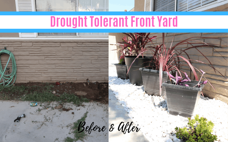 Drought Tolerant Landscape
