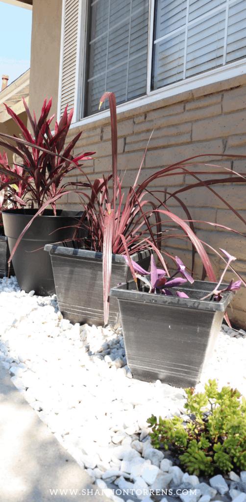 drought tolerant landscape plants